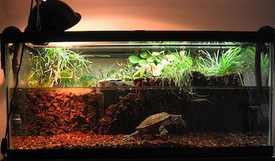 Indoor turtle tank