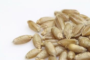 Oat grains Photo©iStock