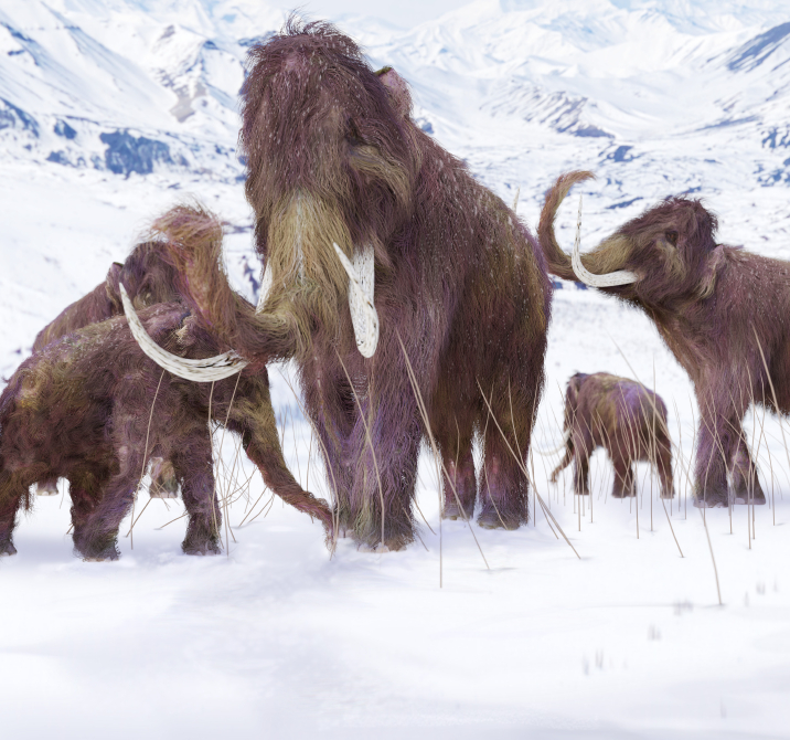 Prehistoric people hunted woolly mammoths © Getty Images