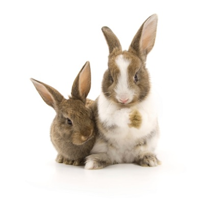 Baby rabbits are called kittens ©Getty Images