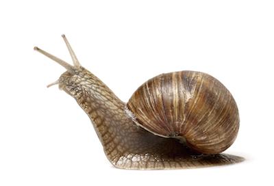 Snail. Photo©iStock