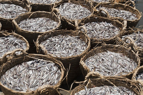 Baskets of fresh anchovies - the main ingredient of fish sauce. photo © Getty