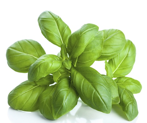 Basil is a herb used in cooking.