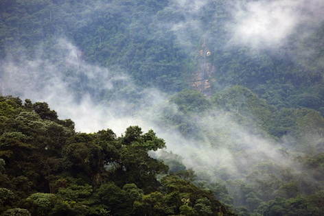 A 'cloud forest' in Ecuador ©Getty Images