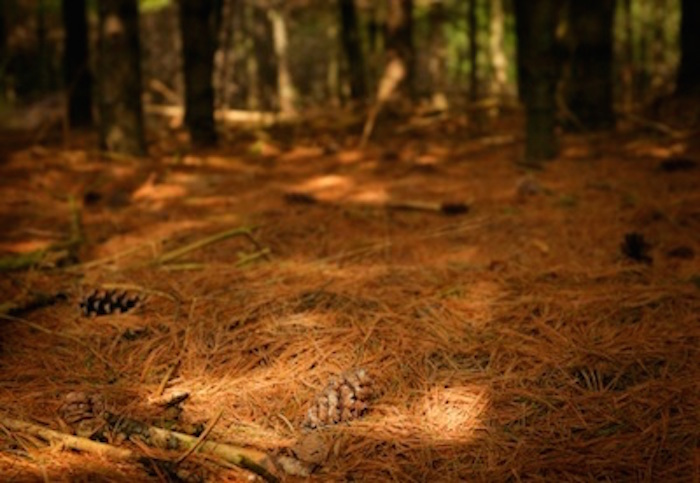 Boreal forest floor ©Getty Images