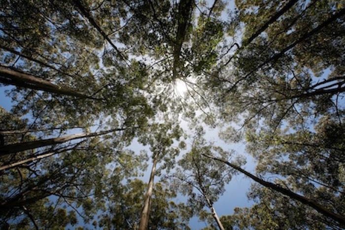 Warm-temperate rainforest, Australia. ©Getty Images