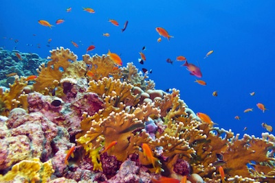 Some reef-building corals are Critically Endangered.