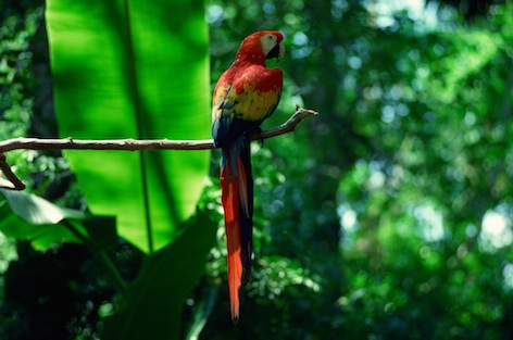 Macaw in a South American rainforest. ©Getty Images