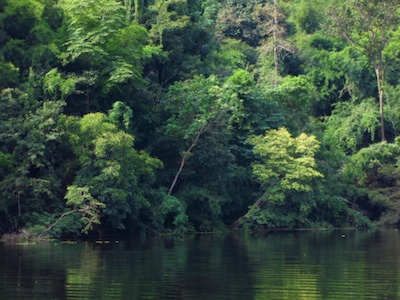 Thick forests along a river, Vietnam. Photo©Getty