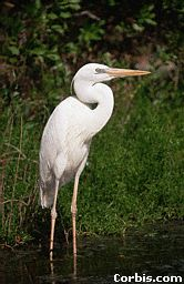 Many birds depend on wetlands for survival.