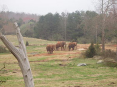 Asian elephants kept in a more natural setting ©kidcyber