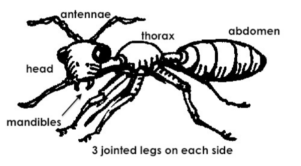 ant-annotated.jpg
