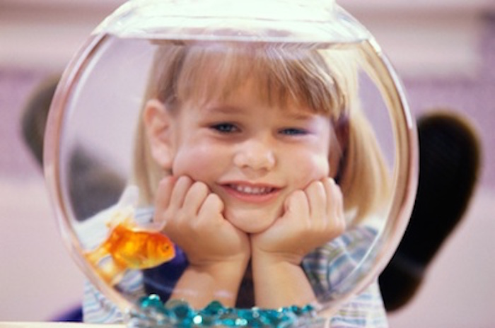Pet goldfish are a good pet to start off with. Getty Images