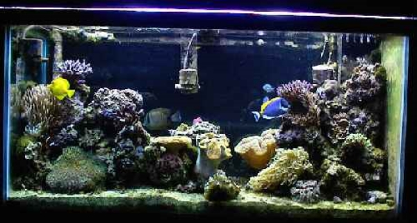 A saltwater tank for tropical fish ©kidcyber