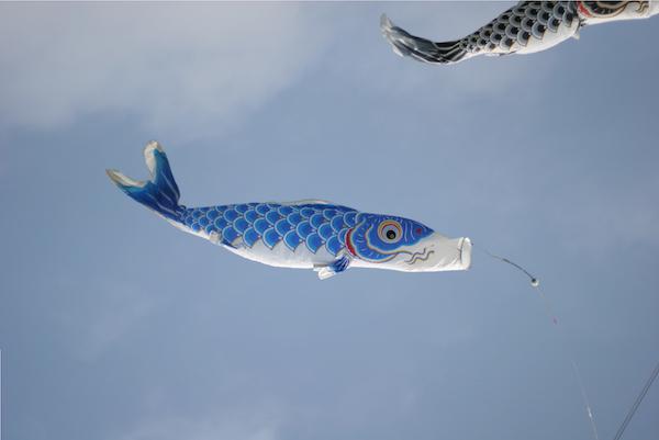 Carp kites are really windsocks