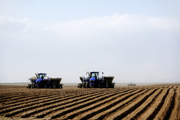 Tractors planting potatoes on a big farm. ©iStock