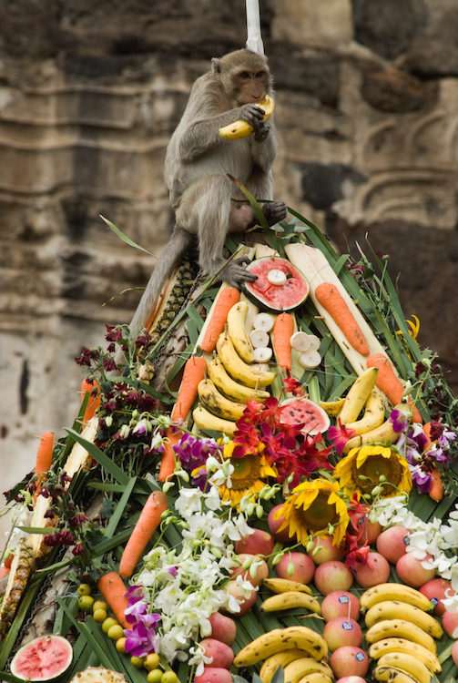 A monkey feasting at the Lopbury Monkey Festival. ©Getty