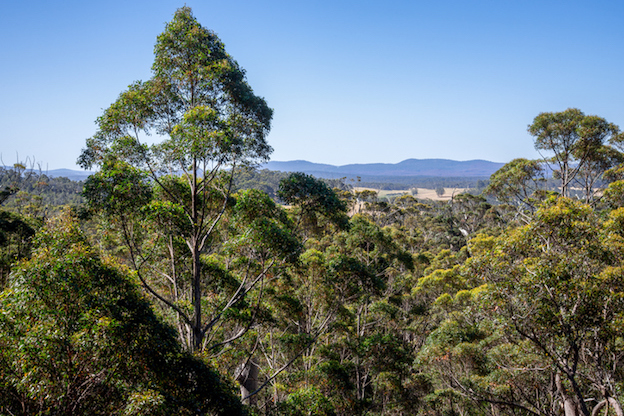 Native forest trees Western Australia ©iStock