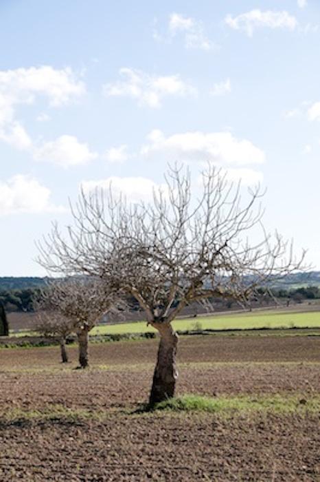 wintertree_jup.jpg
