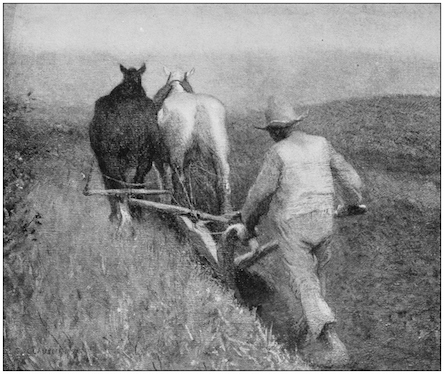 Long ago animals were harnessed together and the farmer followed with the plough. ©iStock