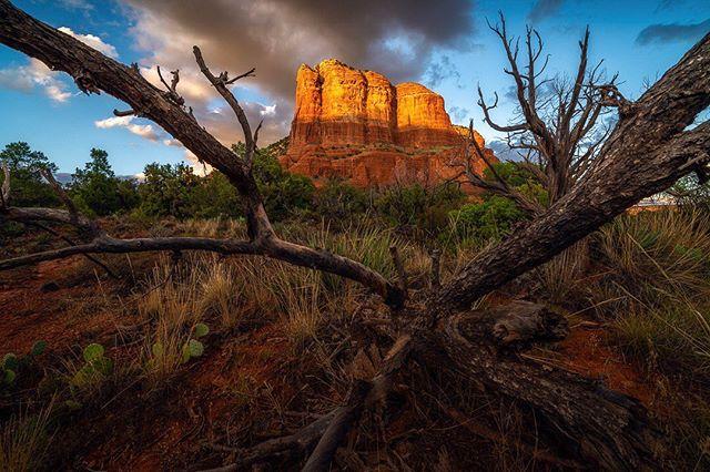 So many of the trees in Sedona look completely sinister. Bob Ross would not approve  Sony A7RIII, 12-24, f/11, ISO 100  #sedona #sedonaescape #icapturesedona #sonyalpha #sony1224g #igsouthwest #instagram_az #azfamily #madewithluminar #westbysouthwest #earth_pix #divine_deserts #fingerprintofgod #captureaz #landscape_love #earthoffical