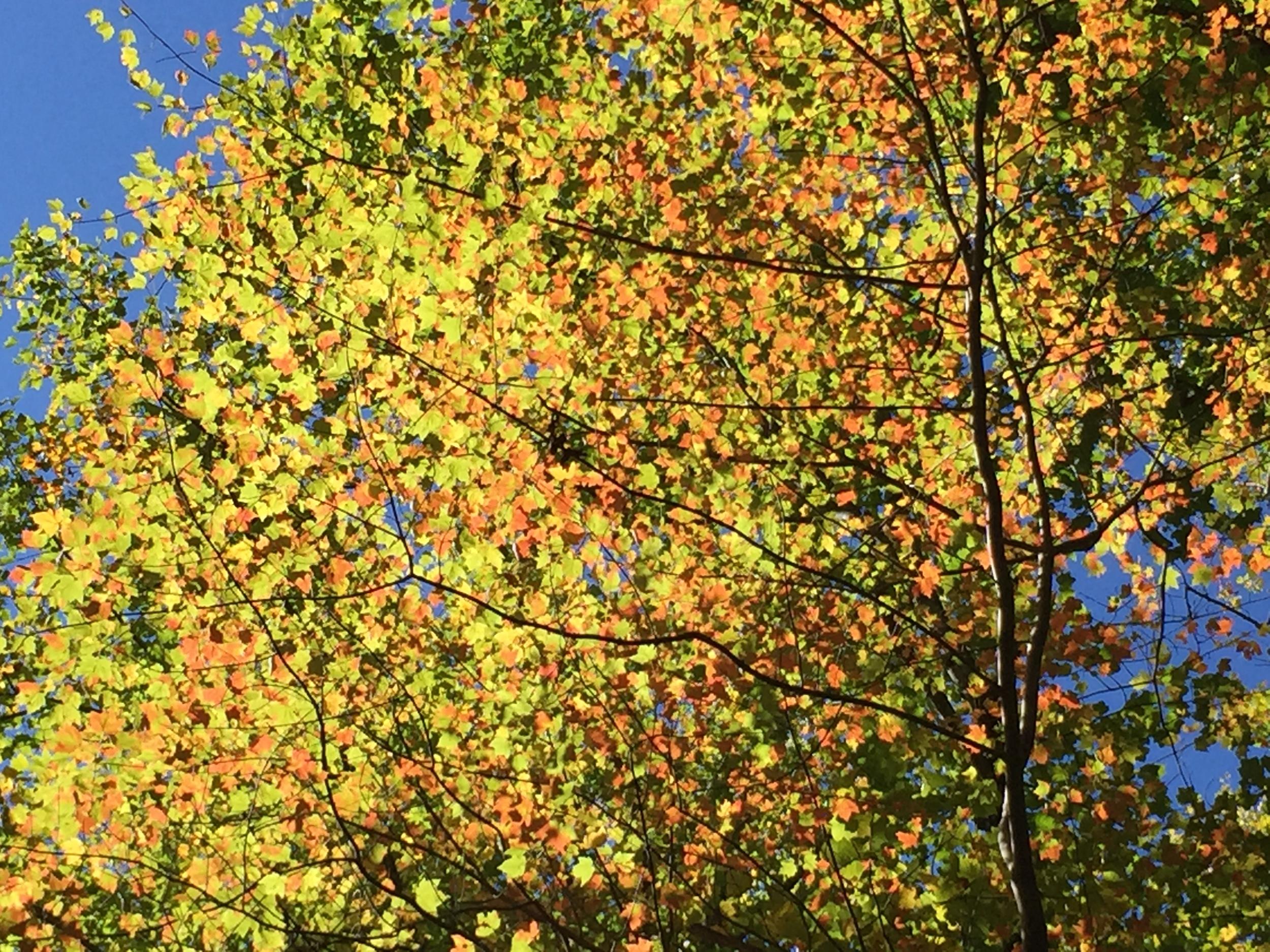 Fall color set