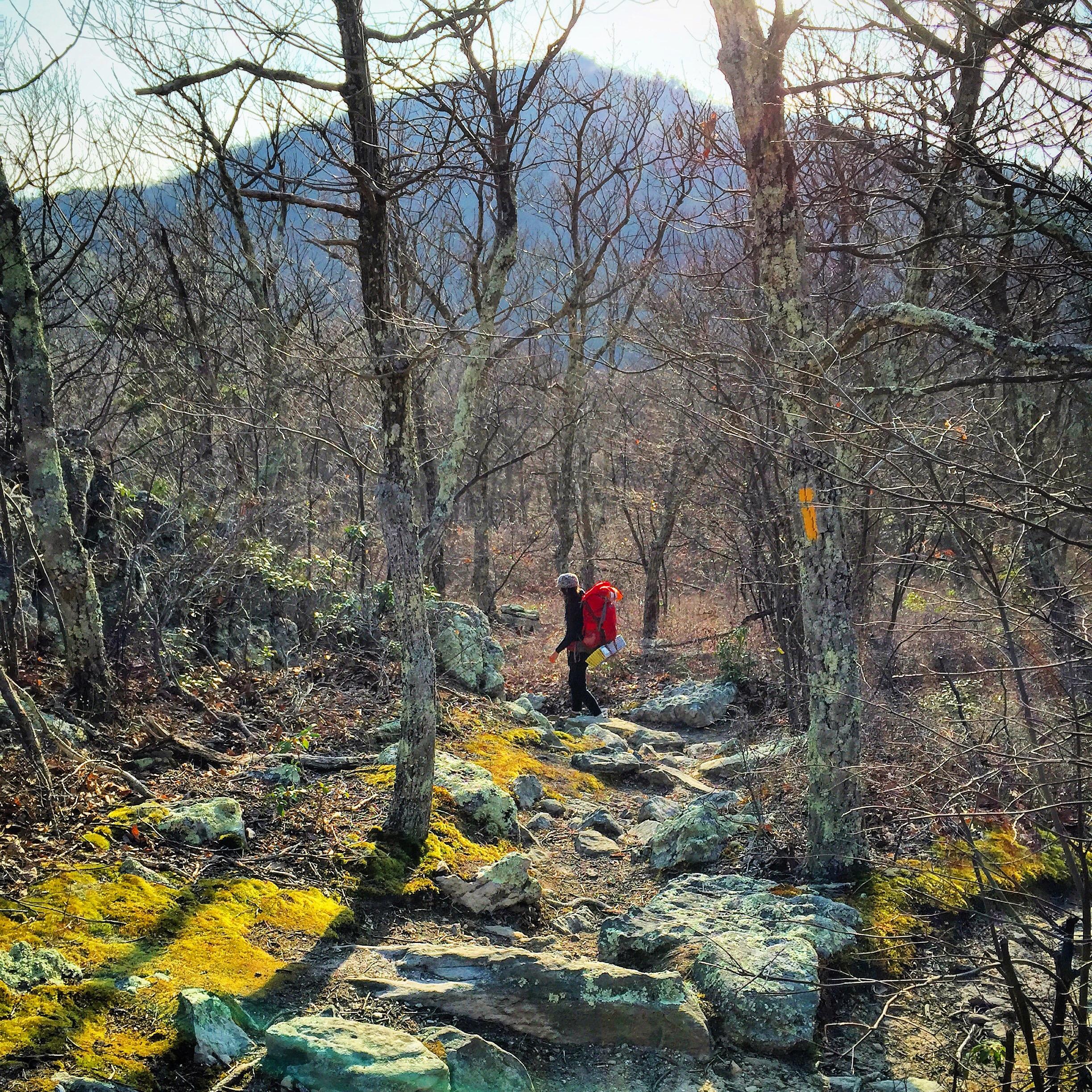 Tibbet Knob, George Washington National Forest, West Virginia