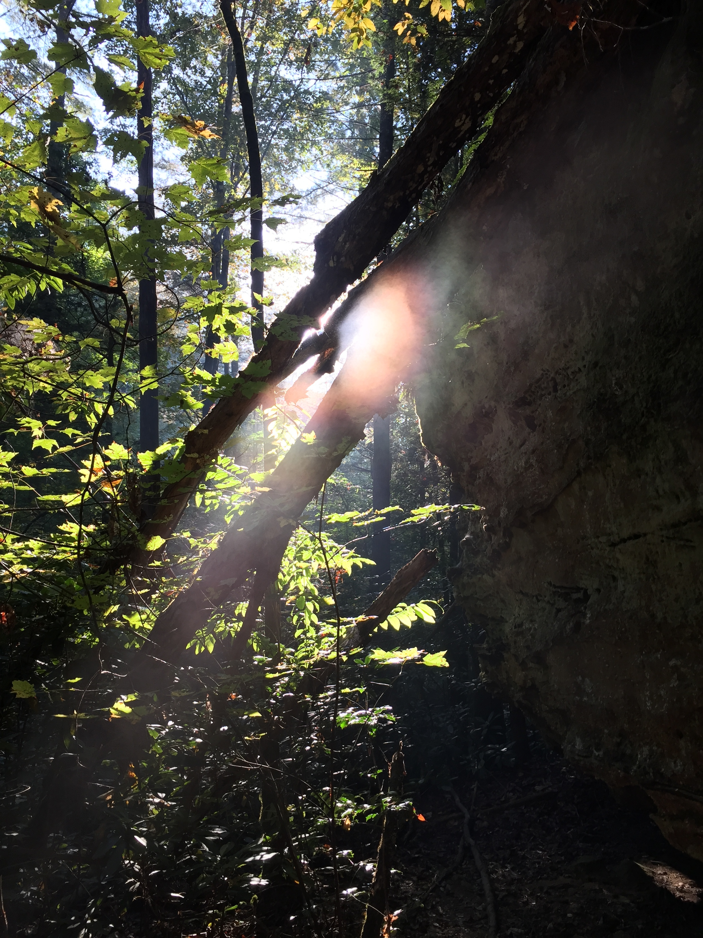 Morning light on the trail to Snow Arch, Red River Gorge
