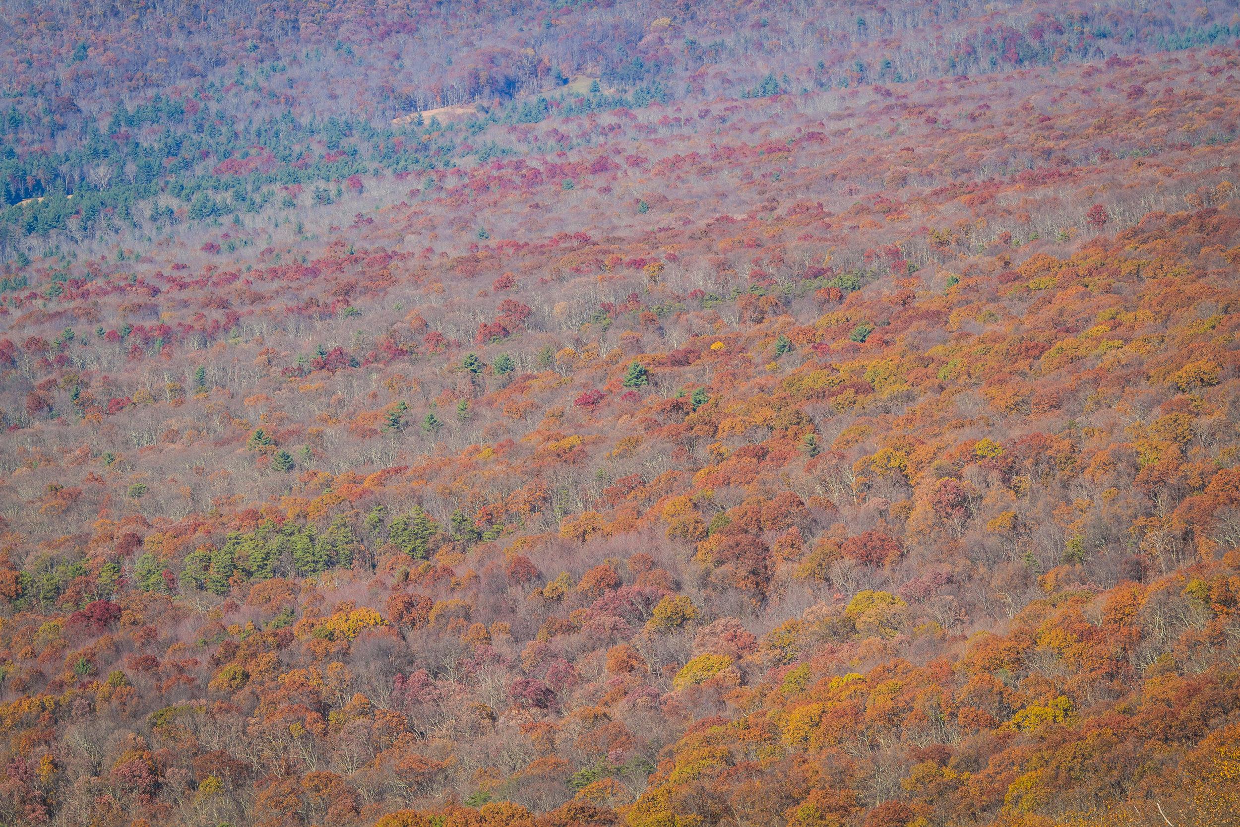 Forests around Big Schloss peak, George Washington National Forest