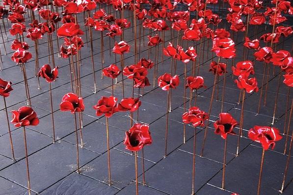 poppies-2585930_640.jpg