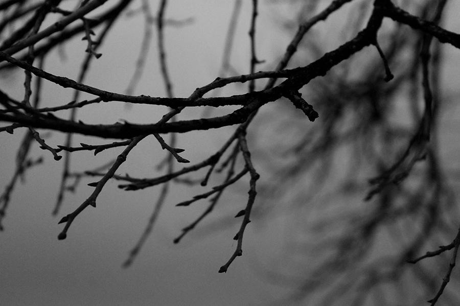 Photography_12.jpg