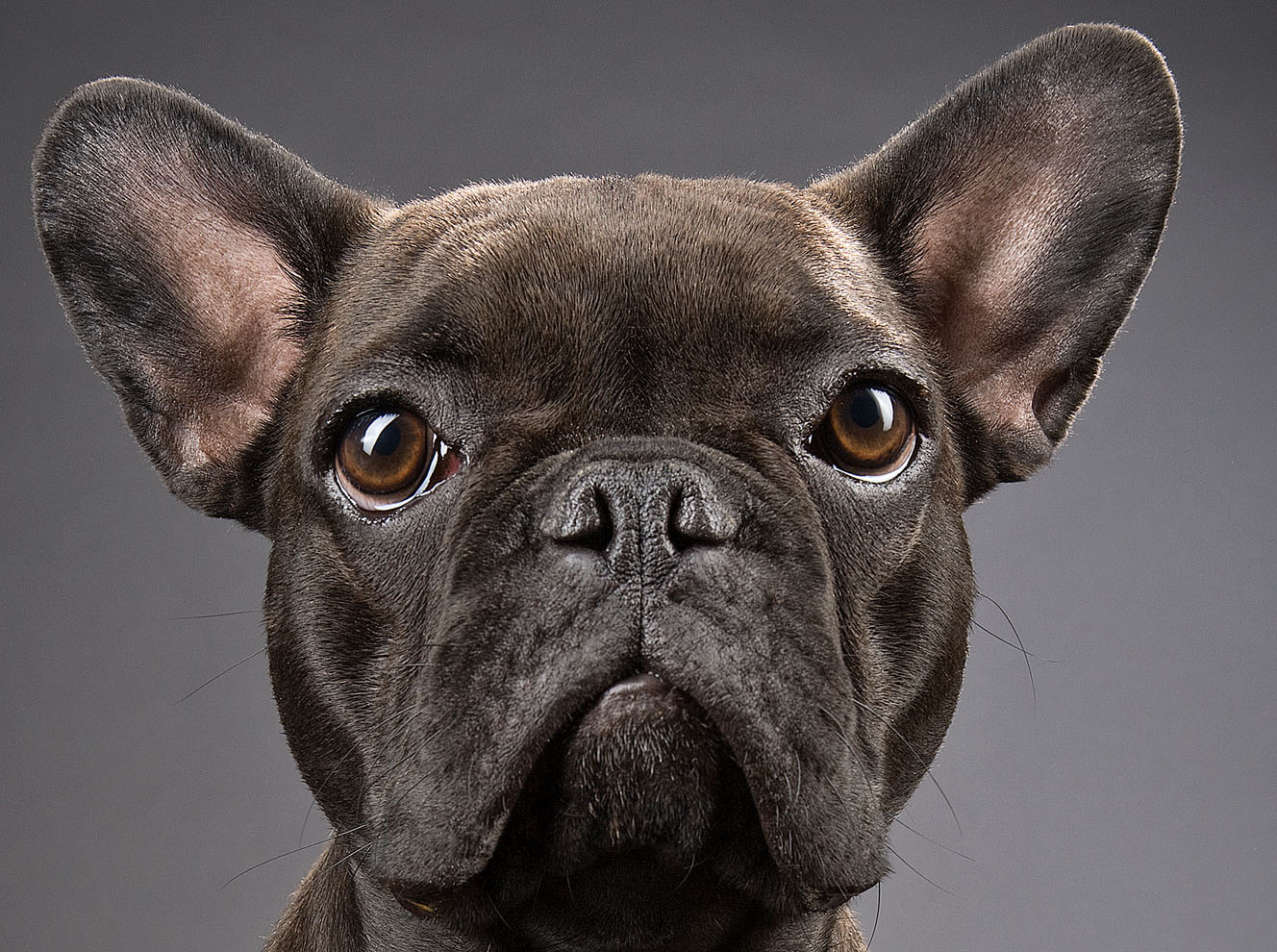 dogs_indoor_15.jpg
