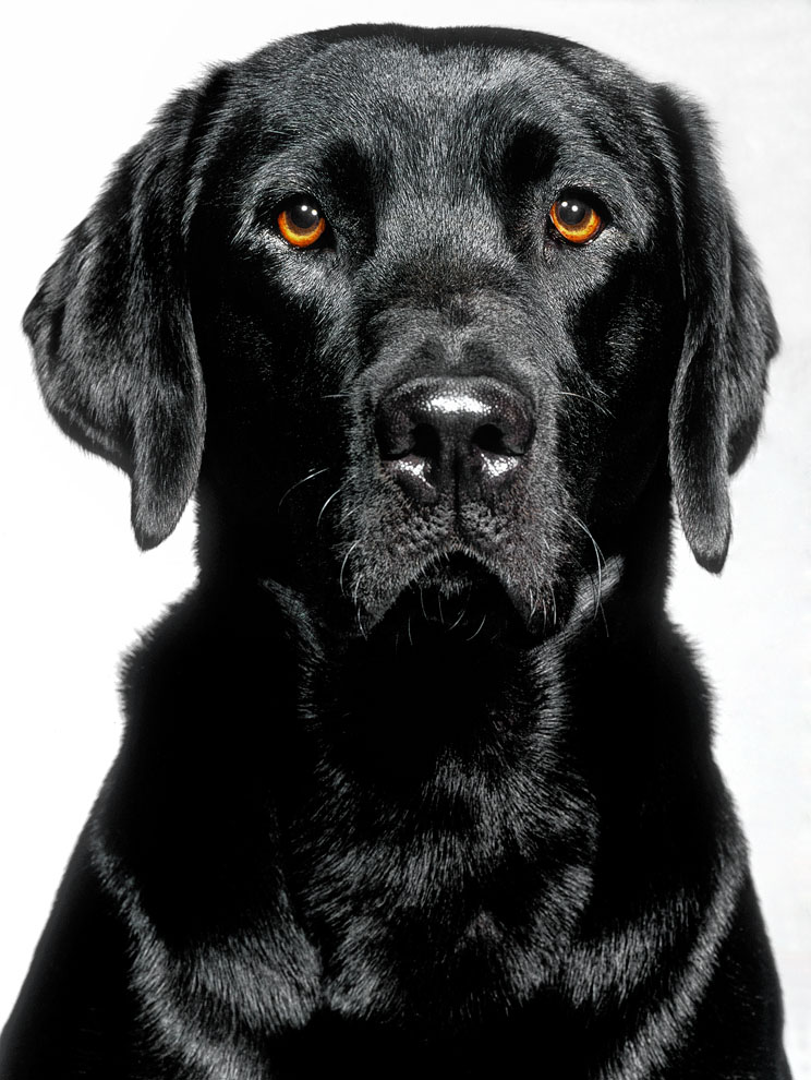 dogs_indoor_26.jpg