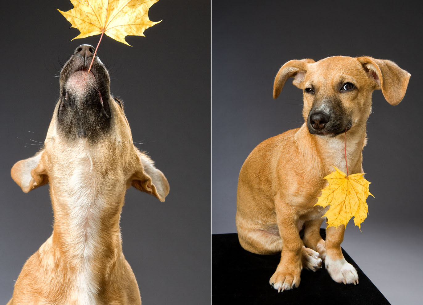 dogs_indoor_31.jpg