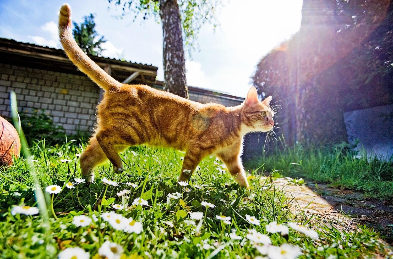 cats_04.jpg