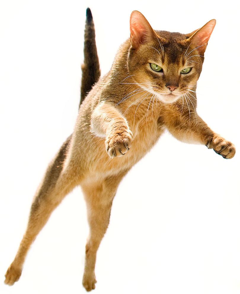 cats_06.jpg