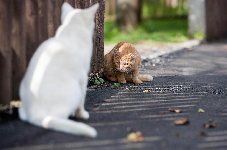 cats_11.jpg