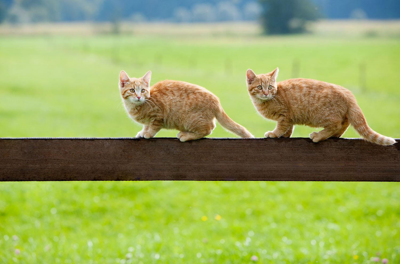 cats_15.jpg