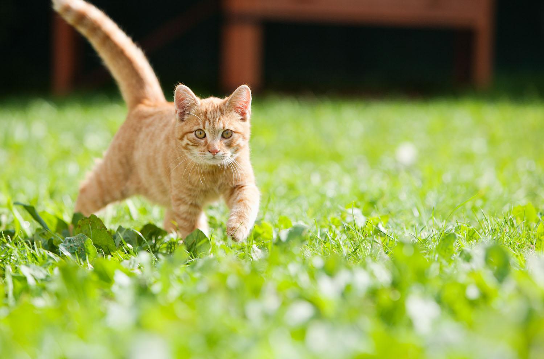 cats_16.jpg