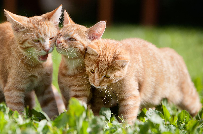 cats_18.jpg
