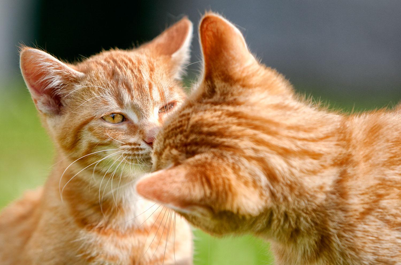 cats_20.jpg