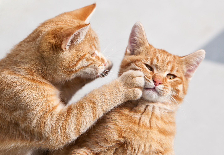 cats_22.jpg
