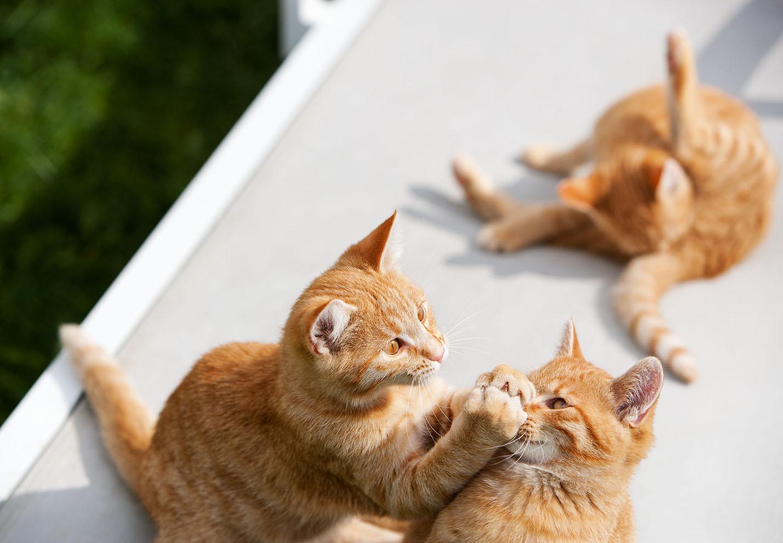 cats_24.jpg
