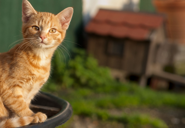 cats_27.jpg