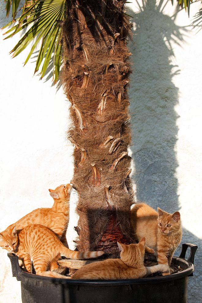 cats_28.jpg