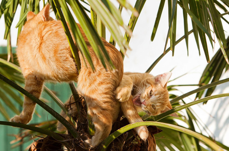 cats_32.jpg