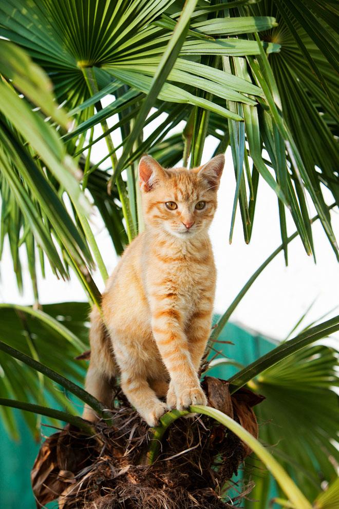 cats_34.jpg