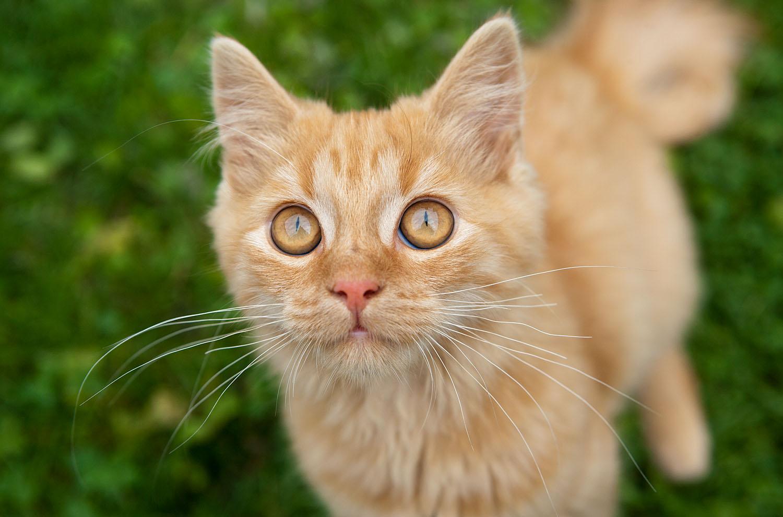 cats_35.jpg