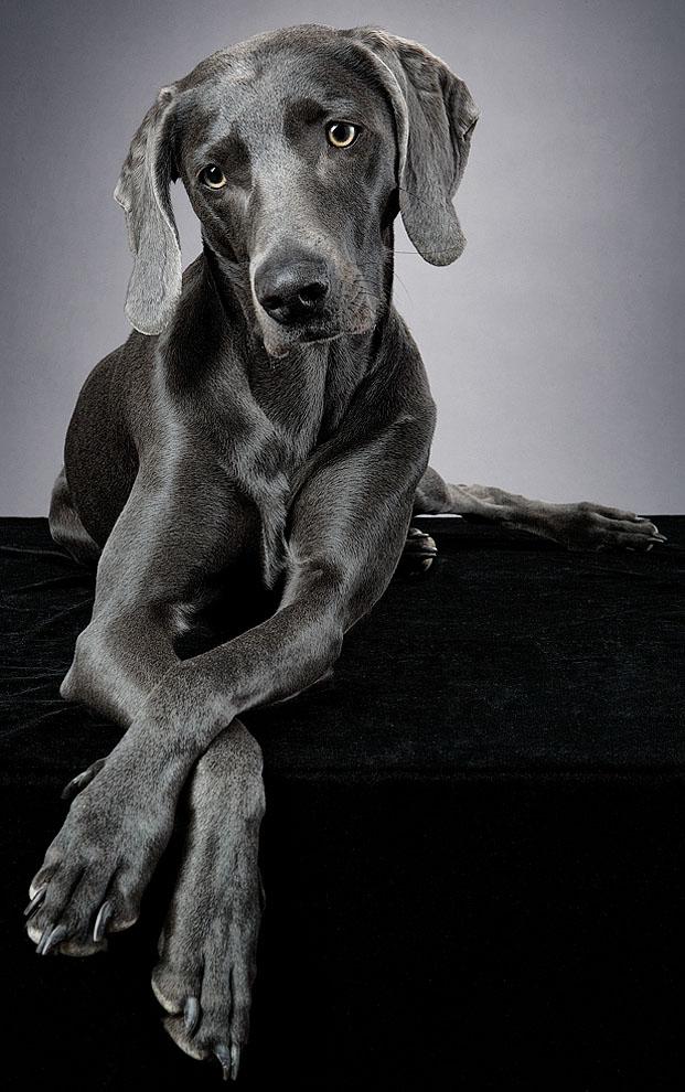 dogs_indoor_09.jpg