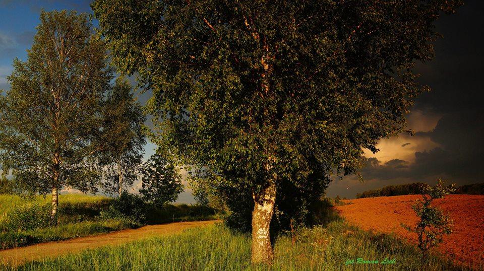 fot. Roman Lech